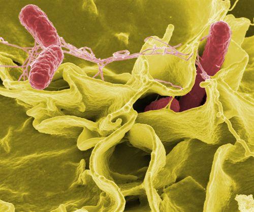 Revestimiento de nanopartículas evita microbios en los alimentos