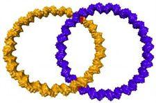 Los 'nano anillos de boda' más pequeños del mundo están hechos con ADN