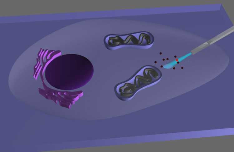 endoscopio-nanotecnologia